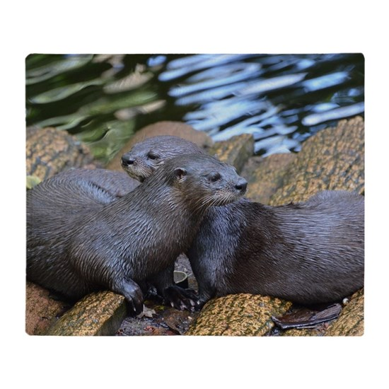 Pair of Cuddling River Otters
