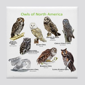 Owls of North America Tile Coaster