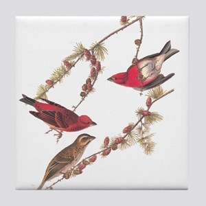 Audubon Purple Finch Tile Coaster