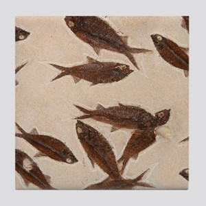 Fossil School of Fish Image Art Tile Coaster