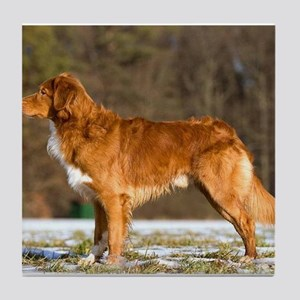 nova scotia duck tolling retriever full Tile Coast