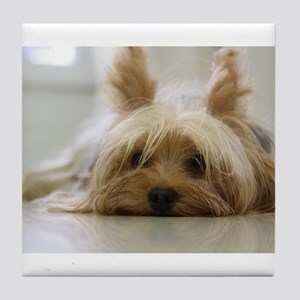 Yorkshire Terrier laying flat Tile Coaster