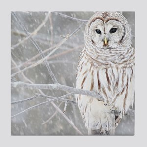 Barred Owl in Winter Tile Coaster