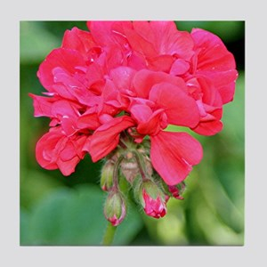 Geranium flower (red) in bloom Tile Coaster