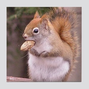 Red Squirrel Eating Tile Coaster