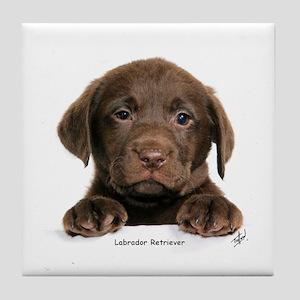 Chocolate Labrador Retriever puppy 9Y270D-050 Tile