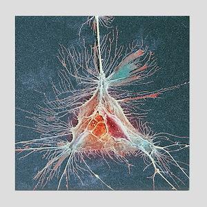 Nerve support cell, SEM Tile Coaster