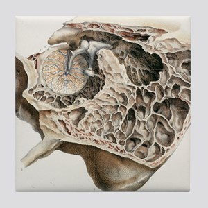 Middle ear anatomy, 1844 artwork Tile Coaster