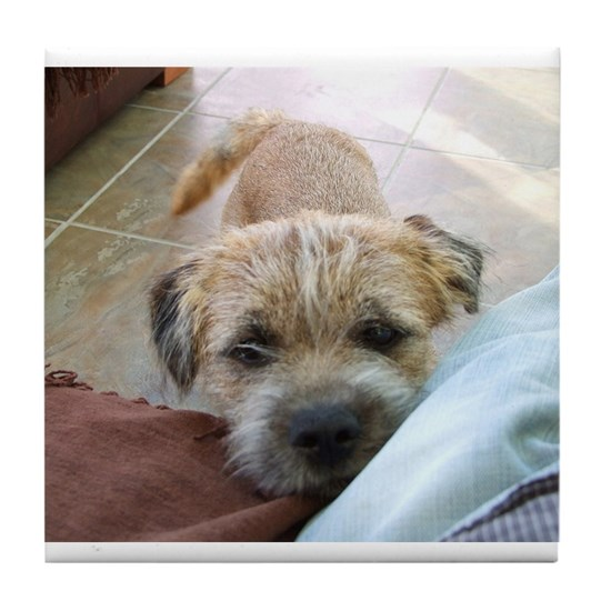 border terrier begging