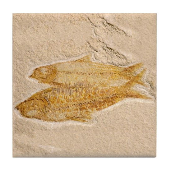 2fossilfish
