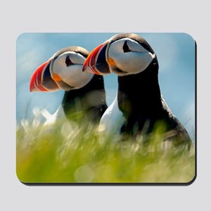 Puffin Pair 14x14 600 dpi Mousepad
