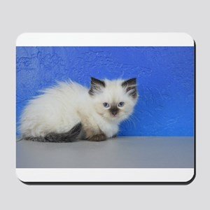 Anna - Seal Point Ragdoll Kitten Mousepad