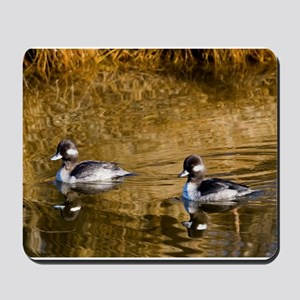 Bufflehead swimming in the winter Mousepad