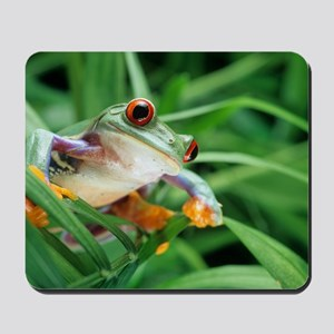 Red-eyed tree frog Mousepad