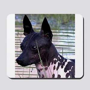 american hairless terrier Mousepad