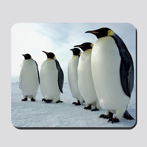 Lined up Emperor Penguins Mousepad