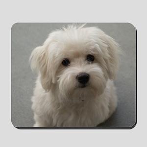 coton de tulear puppy Mousepad