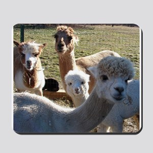 ALPACA FAMILY PORTRAIT™ Mousepad