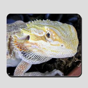 Bearded Dragon 005 Mousepad