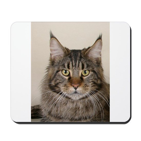maine coon 2