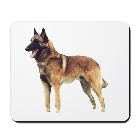 belgian malinois full