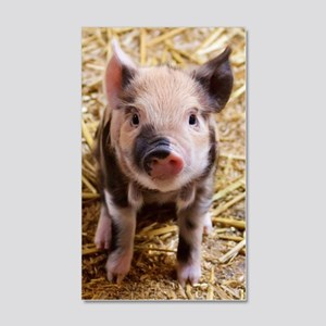 Pig 20x12 Wall Decal