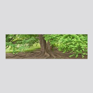 Old man tree 20x6 Wall Decal