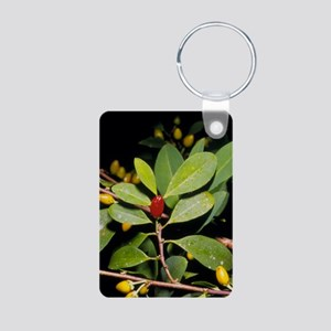 Fruit and leaves of cocain Aluminum Photo Keychain