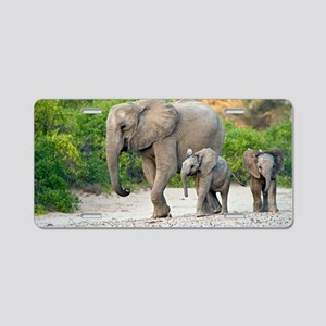Desert-adapted elephants Aluminum License Plate