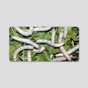 Silkworms on mulberry leave Aluminum License Plate