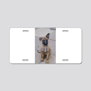 belgian malinois puppy Aluminum License Plate