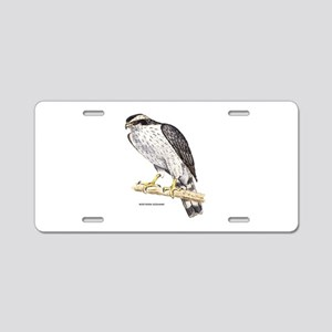 Northern Goshawk Bird Aluminum License Plate