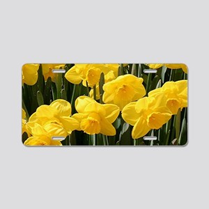 Daffodil flowers in bloom Aluminum License Plate