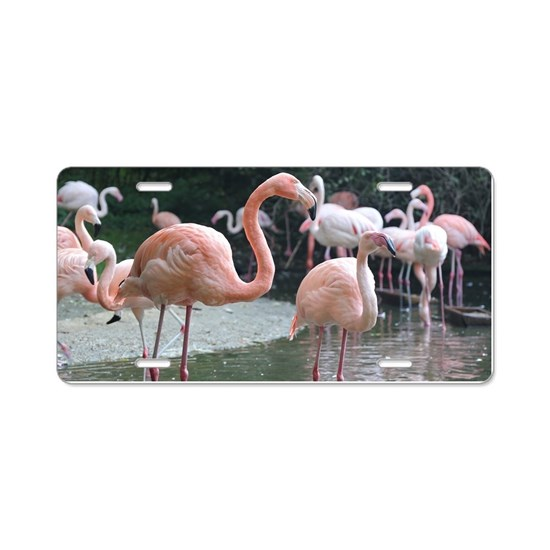 Flamingo Birds Aluminum License Plate by Christine1 aka stine1 on Cafepress
