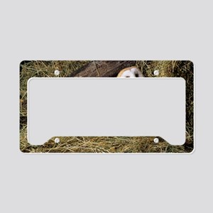 Barn owls License Plate Holder