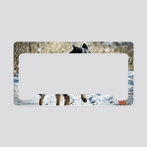 Cattle Dog Calendar 2013 License Plate Holder
