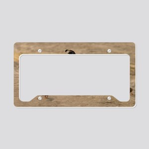 quailfamilylaptopskin License Plate Holder