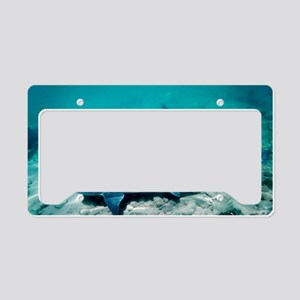 Female leopard sharks License Plate Holder