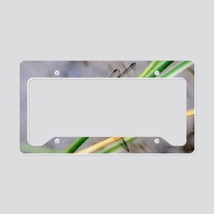 Eastern Pondhawk Dragonfly  License Plate Holder