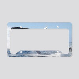 Humpback Whale Jumping High License Plate Holder