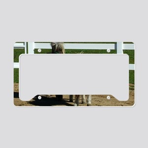 Cute Miniature Horses License Plate Holder