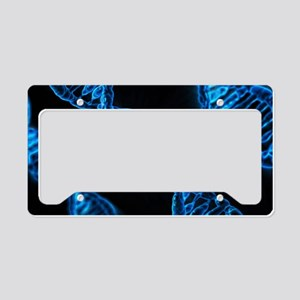 Genetics License Plate Holder