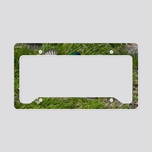 (1) mallards flying License Plate Holder