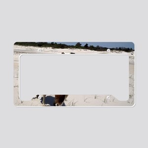 Assateague ponies License Plate Holder