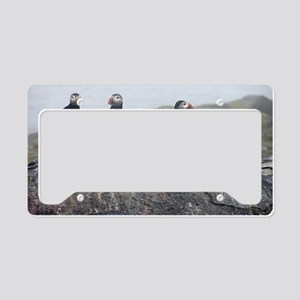 puffins on rock License Plate Holder