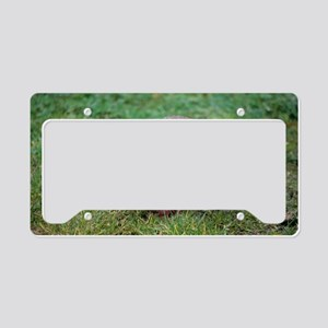 Red-legged partridge License Plate Holder
