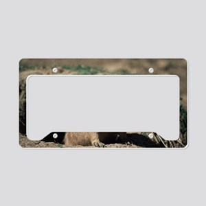 Prairie dog License Plate Holder