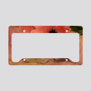 baby_hedgehog_1 License Plate Holder