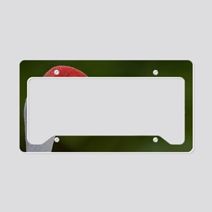 Sandhill Crane License Plate Holder