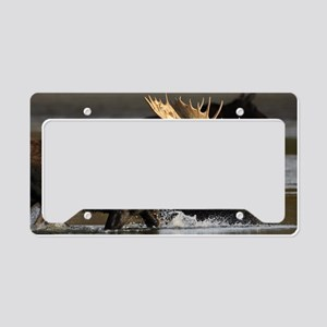 moose splashing in the water License Plate Holder